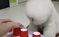 Везучий пес покорил Сеть, сыграв в азартную игру (видео)