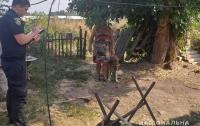 На Харьковщине овчарка напала на трехлетнюю девочку