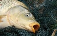 Мужчина выловил самую большую рыбу в мире