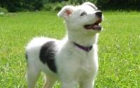 Ученые выяснили, как собаки помогают при сердечно-сосудистых заболеваниях