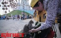 Киевляне и кошки с трудом, но признали отремонтированный Андреевский спуск (ФОТО)
