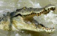 Туриста из Новой Зеландии две недели преследовал крокодил
