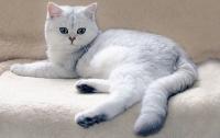 Кот, который спас ребенка, стал номинантом британской премии