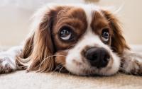 Чтобы не раздражать соседей: Мэр запретил собакам лаять