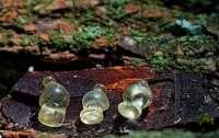 Под Полтавой археологи нашли уникальные украшения