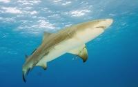 В Сеуле акула съела акулу (ВИДЕО)