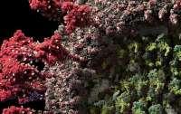 Создана самая детальная и достоверная 3D-модель коронавируса (видео)