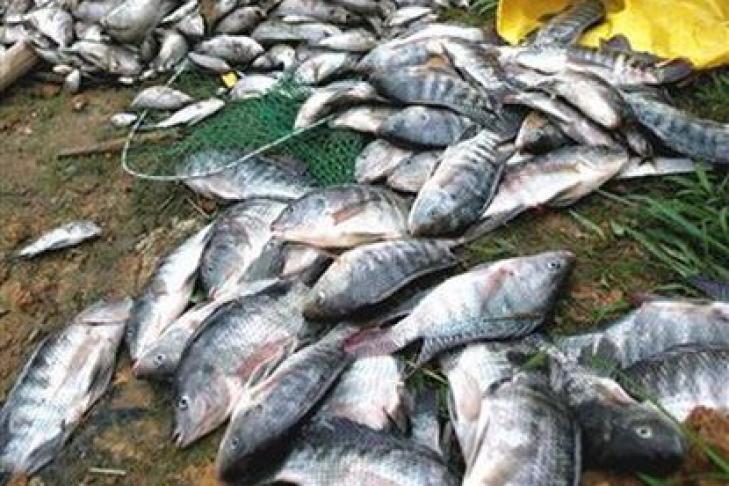 старотитаровская рыбалка
