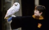 Книга о Гарри Поттере ушла с молотка за $74 тысячи