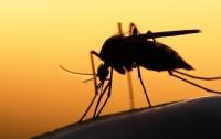 Тропическая малярия в Запорожье: стало известно о смертельном исходе