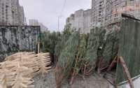 В Киеве уже можно покупать елки