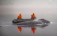 Застрявший в российской реке кит вернулся в море