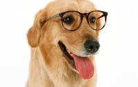 Американец научил собаку лаять шепотом (видео)