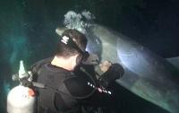 Раненный дельфин попросил аквалангиста о помощи (ВИДЕО)