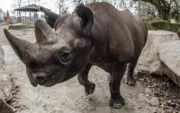 Редкие носороги оказались под угрозой исчезновения из-за цунами в Индонезии