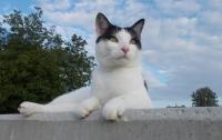 Итальянка завещала своему коту наследство в сумме €1,5 миллиона