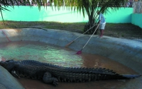 На Филиппинах умер крупнейший гребнистый крокодил в мире