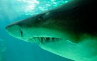 Уникальных светящихся акул нашли в водах Калифорнии (видео)