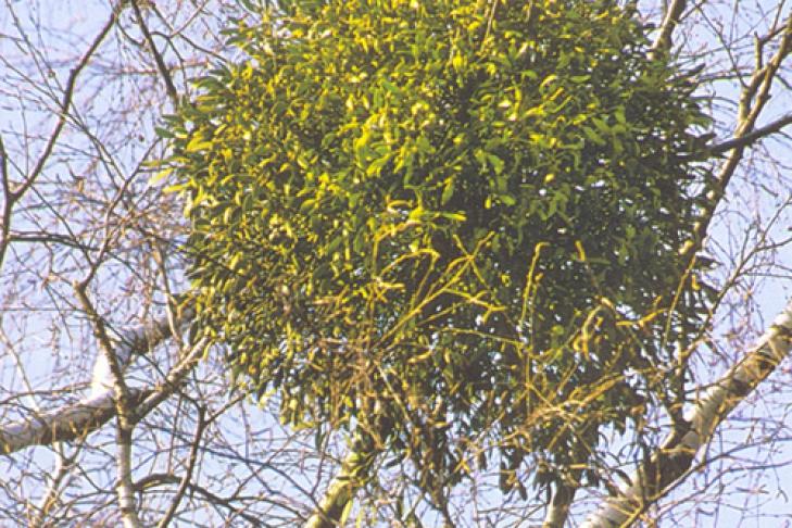 желто зеленые деревья картинки