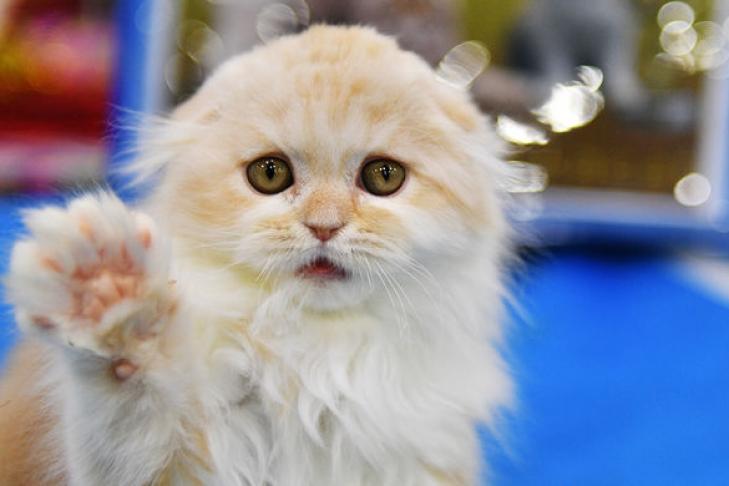 Кошка спасла жителя Марий Элот погибели при пожаре