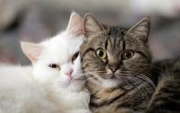 Серийный убийца котов держит в страхе французскую деревню