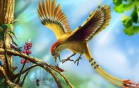 Палеонтологи по новому объяснили почему у птиц нету зубов