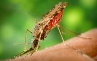 В Кировограде зафиксировали малярию