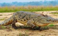 Похоронить 130-летнего крокодила пришли 500 человек