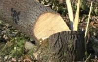 На Львовщине вырубка леса завершилась трагедией