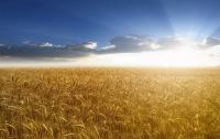 Минагрополитики и «Киевголография» парализуют рынок сельхозпродукции