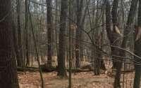 На Черниговщине в лесу нашли тело прокурора