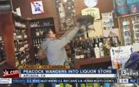 Павлин устроил погром в винном магазине (видео)