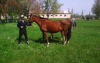 Чиновники не хотят спасать лошадей, которые срочно нуждаются в помощи