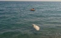 На пляже Ялты нашли крокодила (фото)