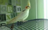 В Канаде вызвали полицию из-за громкой ссоры мужчины с попугаем