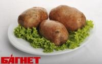 В Украине ожидается суперурожай картофеля