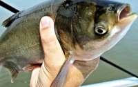 В Черкасской области браконьер наловил рыбы на 280 тысяч гривен