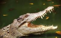 Крокодил утащил австралийца в разгар вечеринки