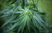 Житель Германии донес полиции на мать за выращивание марихуаны