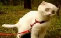 Котенок с драматическим взглядом «порвал» интернет (ВИДЕО)
