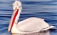 В Донецкой области неизвестные вандалы устроили террор против пеликанов (ФОТО)