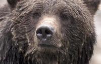 На севере Канады женщина с ребенком погибли после нападения медведя
