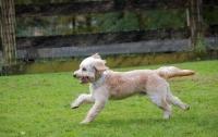Суд Мюнхена позбавив мисливця ліцензії після того, як його підстрелив собака