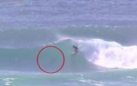 Выпрыгнувший из воды дельфин едва не убил серфера (видео)