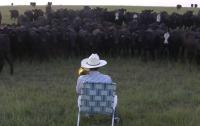 Фермер из Америки научил коров подпевать (ВИДЕО)