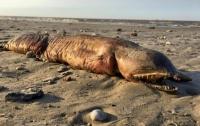 Ученые идентифицировали загадочное существо с пляжа в Техасе