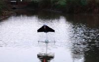 В Лондоне представили летающего робота-рыбу