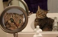 Пользователей интернета рассмешило фото удивленной кошки