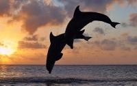 На Одесщине из-за браконьеров продолжают гибнуть дельфины