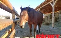 В Одесской области заживо сожгли лошадь